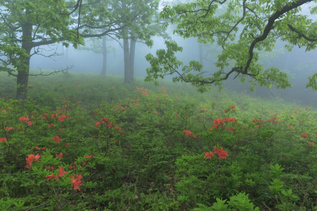広島のドライブスポット 日帰りの大自然冠高原