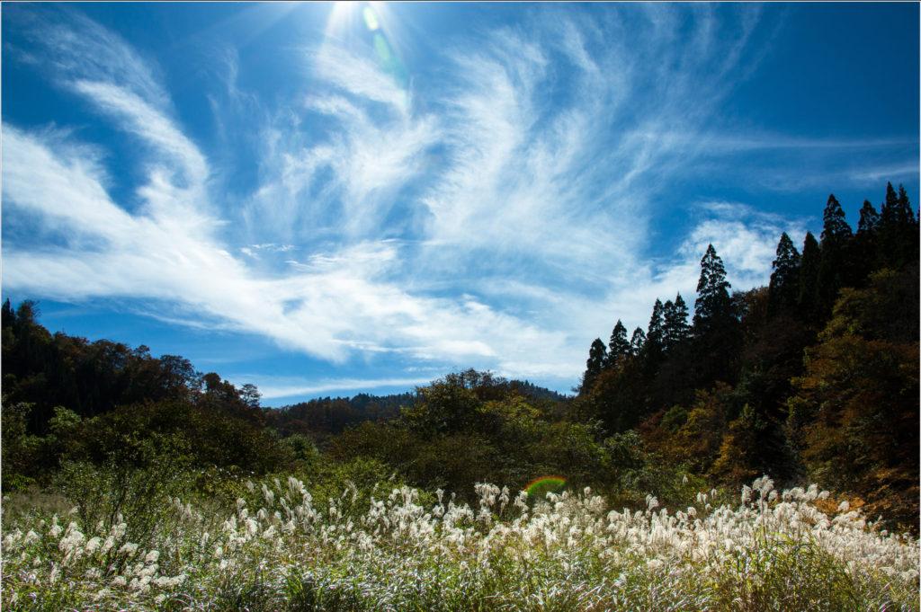 広島で大自然を楽しめる細見谷渓谷