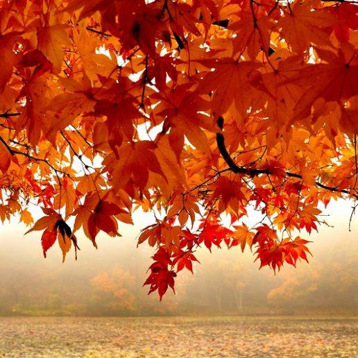 秋に広島でゆっくり紅葉を楽しみたい人にもオススメ