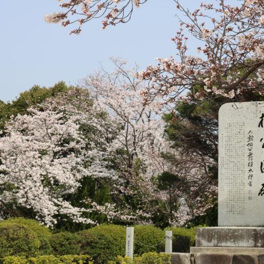 桜を見ながらお花見にぴったりの公園
