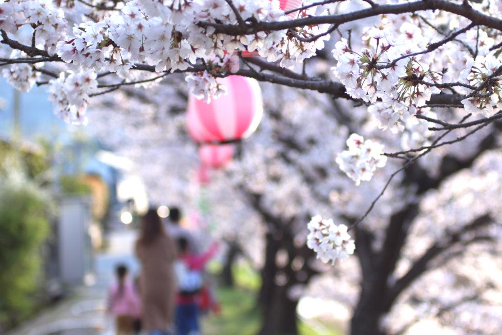 御手洗川の桜並木はまちの人の笑顔に癒される