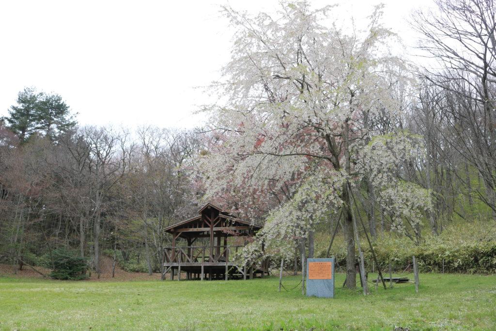 桜が楽しめる自然豊かな公園。子供とのお出かけにぴったりの観光スポット。